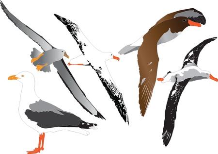 albatross: albatross collection