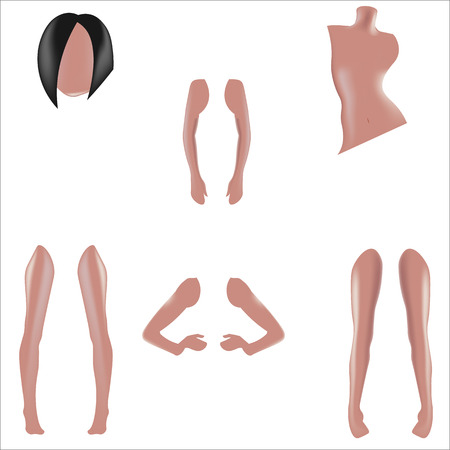 disassembled: Disassembled mannequin for clothing, realistic vector illustration