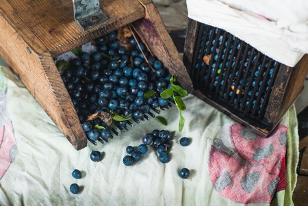 gather: wooden tools are used to gather blueberries, a scattering of fresh forest berries Stock Photo