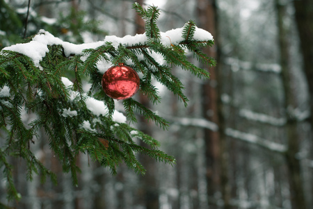 red christmas ball: Red Christmas ball on snowy tree branch. Christmas tree in winter forest. Christmas background. Happy New year Stock Photo