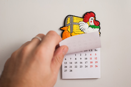Tear-off calendar, a symbol of the new year rooster,