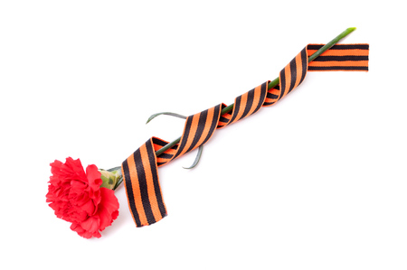 nazis: Red Carnation St. George ribbon on white background, ribbon wrapped around the flower, the symbol of the great Victory over the Nazis, victory day,