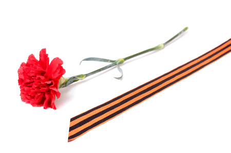nazis: Red Carnation St. George ribbon on white background, symbol of the great Victory over the Nazis, victory day,