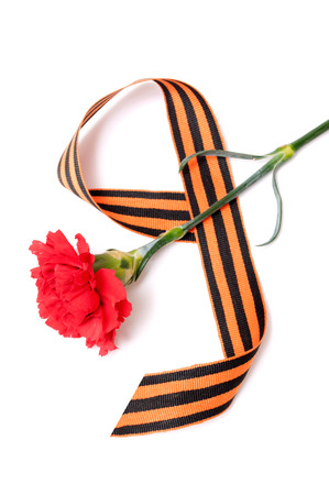nazis: Red Carnation St. George ribbon on white background, the tape in the form of figure 9, the symbol of the great Victory over the Nazis, victory day,