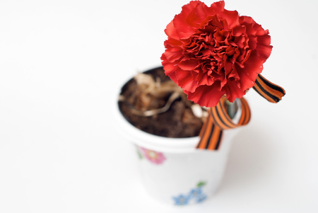Red Carnation St. George ribbon on white background, flower pot, symbol of the great Victory over the Nazis, victory day,
