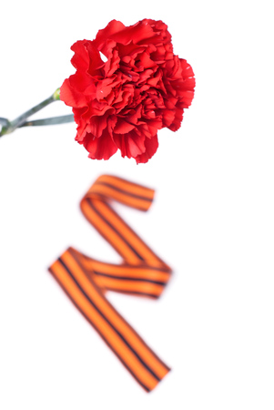 soldiers: Red Carnation St. George ribbon on white background, symbol of the great Victory over the Nazis, victory day,