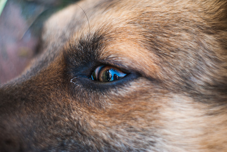 sight seeing: Dogs eye closeup, eye diseases in dogs, a scared mutt Stock Photo