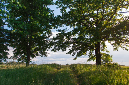 prosper: Lush trees on a warm summer day, against the sky, road to the clouds, rural landscape Stock Photo