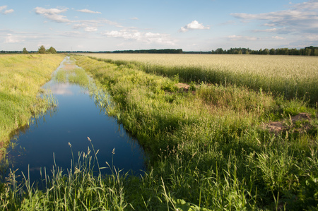 Water channel for irrigation of the fields, the rye field and blue sky with clouds, rural landscape Stock Photo