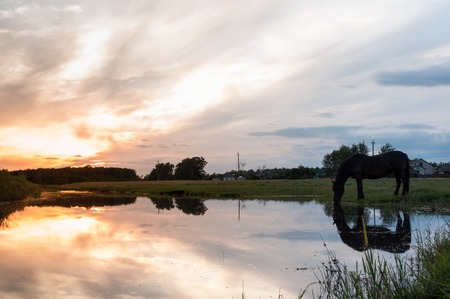A horse drinks water at sunset with reflection, dramatic sunset, beautiful landscape