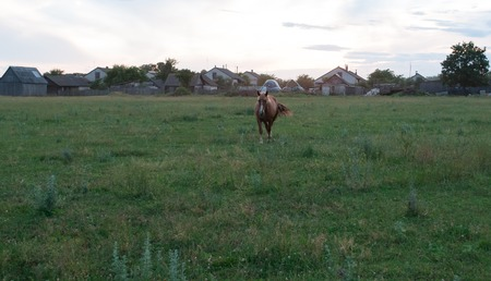 Brown horse grazing in a meadow, the horse in the evening on the background of the village