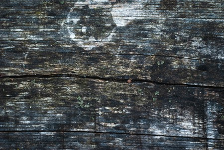 Natural Wood Texture background, Top View, old wood,