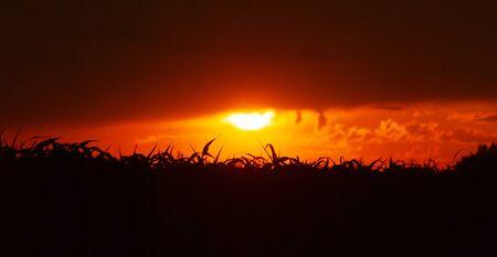 Beautiful morning sunrise over a corn field, bright sunset,