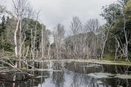 Forest flooded after construction of hydroelectric power station, environmental disaster,