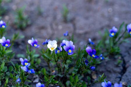 blue flowers in the garden under the sky