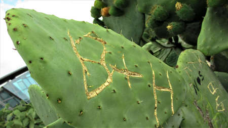 Writings on the cactus leaf in botanical park