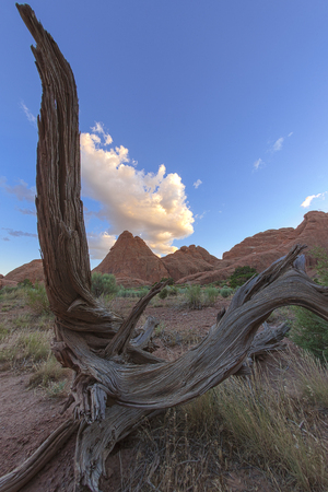 Dried out wooden harp in Arches National Park, Moab, Utah, United States of America