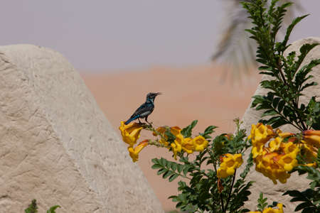 Little bird shot whilst sitting on the yellow flower. Profile look. Desert at the background