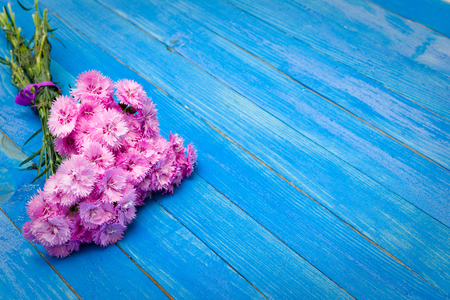 Small bouquet of red carnations on the blue shabby boards.