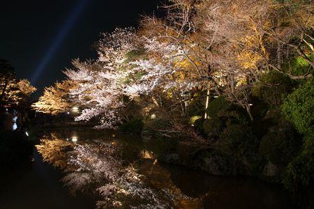 stunning: Stunning Cherry blossom reflection