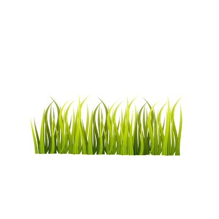 Green grass vector isolated on white background