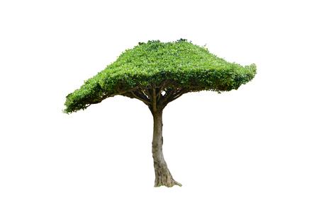 De boom van de grote tandenborstel isoleerde witte achtergrond Stockfoto