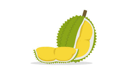 Flat Durian and cut piece vector with isolated white background.King of fruit.Tropical friut. Illustration