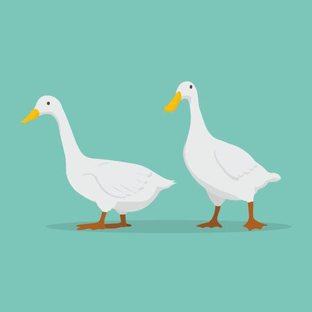Duck cartoon set vector illustration.cute white ducks farm.Goose standing with blue background