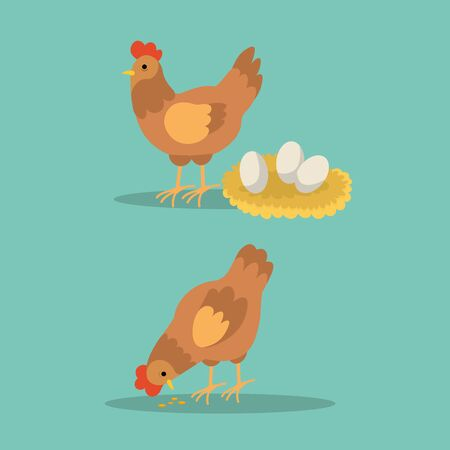 Hen and rooster with eggs and eating uncooked rice on blue background. Chicken character pose vector illustration. Hen farm egg