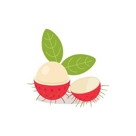 Rambutan with leaves and isolated white background.Vector illustration.Rambutan Fruit Split In Half