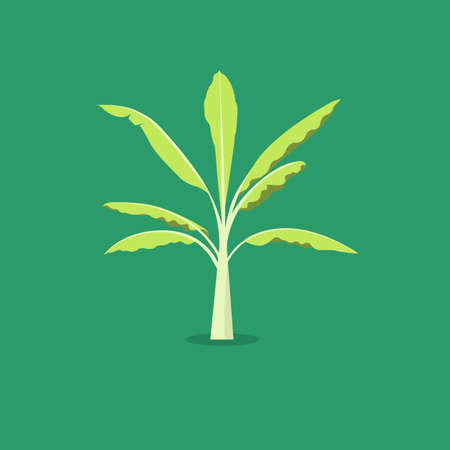 Banana tree vector with green background.Tree object flat style  イラスト・ベクター素材