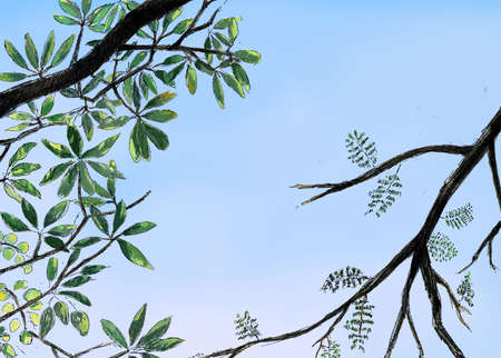 Nature view with tree branch leaf and sky background.Natural green leaf and branch art background Stok Fotoğraf