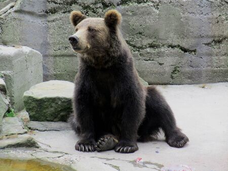 bear in the zoo