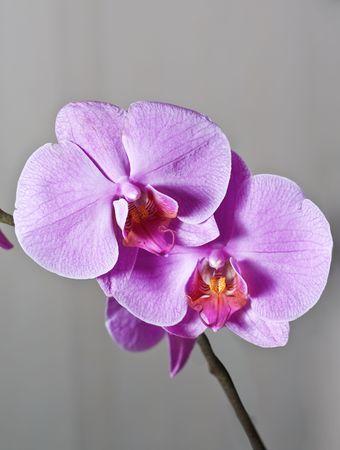 Closeup orchid photo