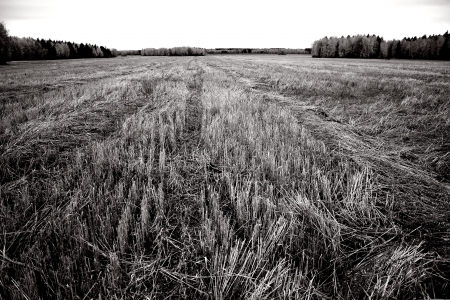sloping: sloping field