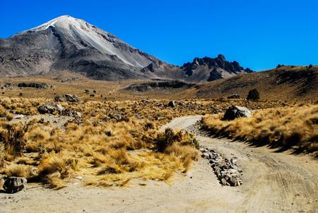 Volcano hiking trail yellow plants