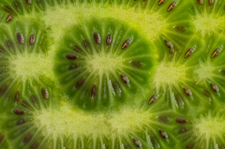 Abstract background from natural fruits kiwifruit, Actinidia. For design and network