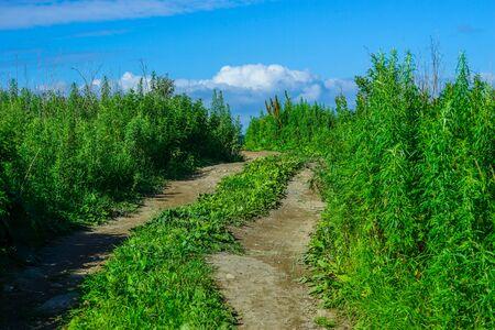 Natural landscape with dirt road among vegetation. 写真素材 - 132313577
