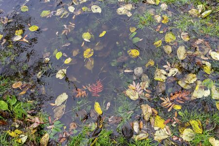 Natural background with a puddle of water and autumn leaves