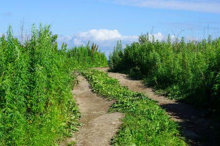 Natural landscape with dirt road among vegetation. 写真素材 - 132313051
