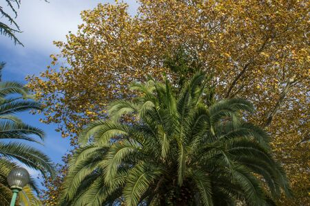 Palm leaves on the background of vegetation in the autumn season 写真素材 - 132387197