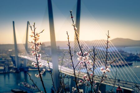 Blossoming cherry branches on the blurred background of the Golden bridge. Vladivostok, Russia 写真素材 - 132446399