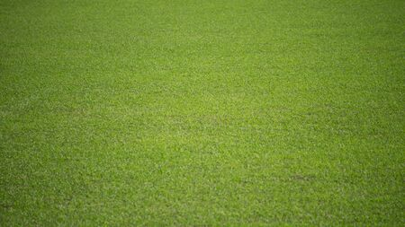 Natural background of a green football pitch of grass.