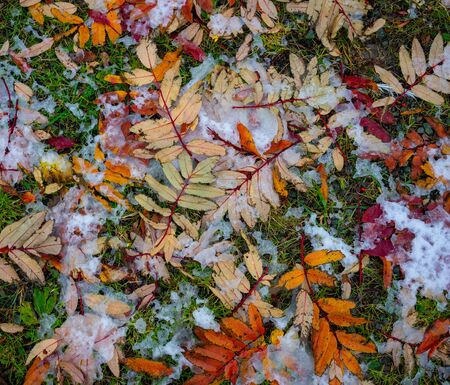 Natural background with yellow and red leaves on snow 写真素材 - 132749383