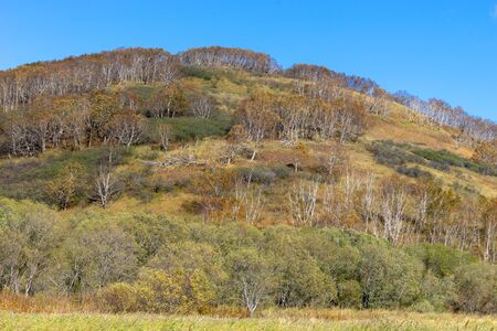 Landscape with a mountain covered with forest against the blue sky, Kamchatka. 写真素材 - 132756180