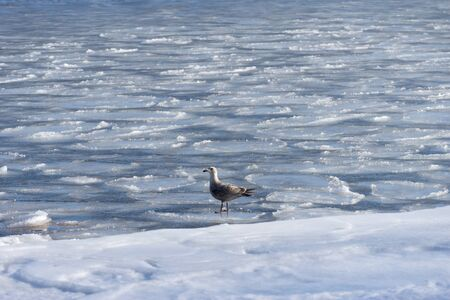 Seascape with a Seagull on the frozen surface of the sea 写真素材 - 132757905