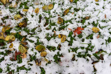 Natural background with yellow and red leaves on snow 写真素材 - 133345319