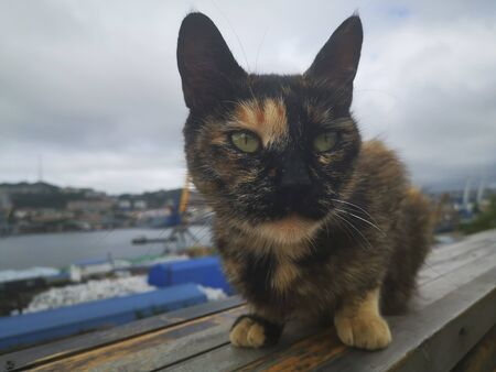 Tri-colored alley cat on the background of the sea port Zdjęcie Seryjne