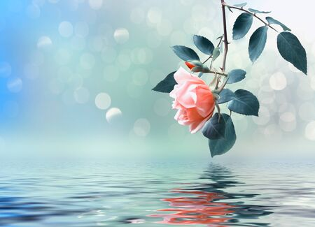 Floral background with rose branch reflected in water
