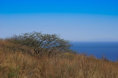 marine landscape with views of the coastline with trees and dry grass